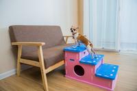 Meitoku new design household eva foam mini toys form pets house use