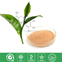100% Natural Green Tea P.E catechins 20%-95%
