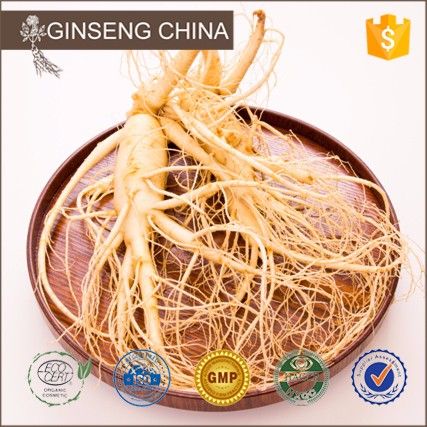 Chinese Root Natural Ingredient Ginsenosid 100% Soluble In Water Panax Ginseng Extract