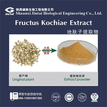 Natural 5:1 10:1 20:1 TLC Plant extract Fructus Kochiae
