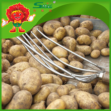Pakistan New Crop Fresh Potato with Lowest Price