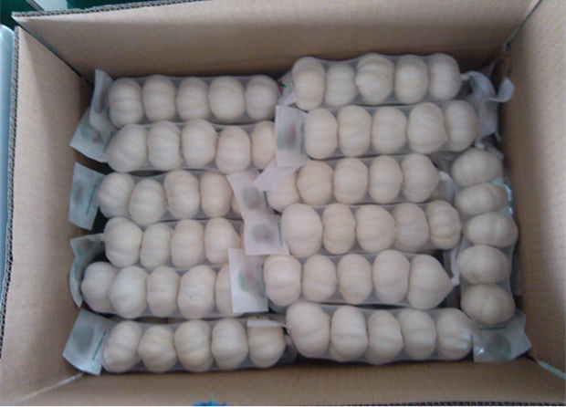 High quality chinese garlic for sale