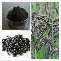 Natural black rice extract -- anthocyandins 25% 50%