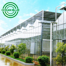 10 years warranty low cost agriculture glass Greenhouse for Sale