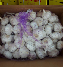 Liliaceous Vegetabless Product Type bulk garlic for sale