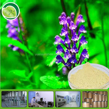High Quality Radix Scutellaria Extract / Baicalin