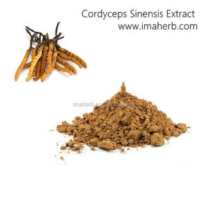 Factory Supply Organic cordyceps sinensis price low price