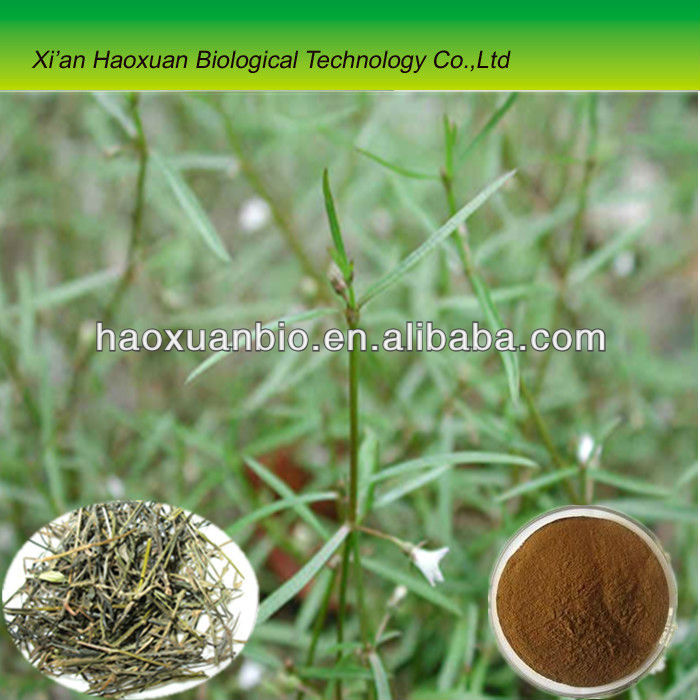 Spreading Hedyotis Herb Extract Powder/Oldenlandia diffusa