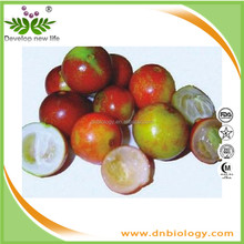 Factory supply Camu extract Vitamin C 20% 5:1 Myrciaria dubia extract 10:1 Camu Camu Fruit Powder