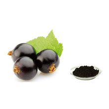 ISO Certificated 100% Natural Anti-aging Blackcurrant Extract Powder, Anthocyanidins Powder