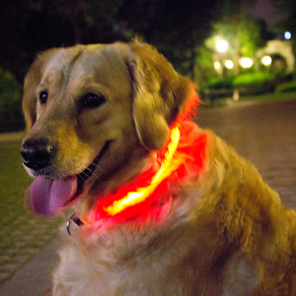 Outdoor Night Safety Warning led Pet Staff Nylon Cover led Dog Cat Collar Accessory With High Quality