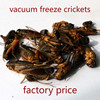Pet Food from Pet Food Supplier (Vacuum freezing Dry Crickets)