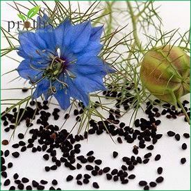 Wholesale hot sale nigella sativa extract from certified company