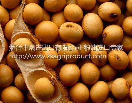 Wholesale <strong>U</strong>.S. GMO Soybean Argintina Soybean Grade 2 for Oil