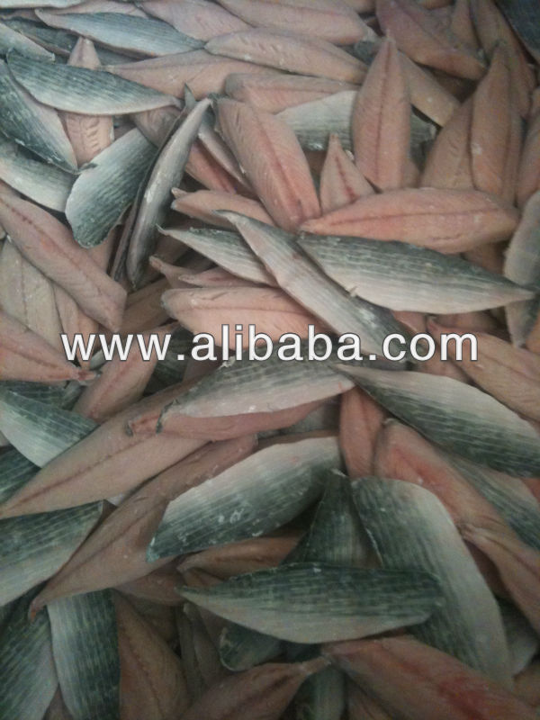 Mackerel fillets frozen Scomber scombrus