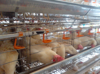 Factory design egg chicken cage for layer poultry farm for sale