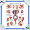 3D Embossed Chart Plastic Medical Wall Picture