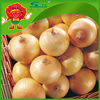 best pearl onions fresh yellow onion types low price for sale