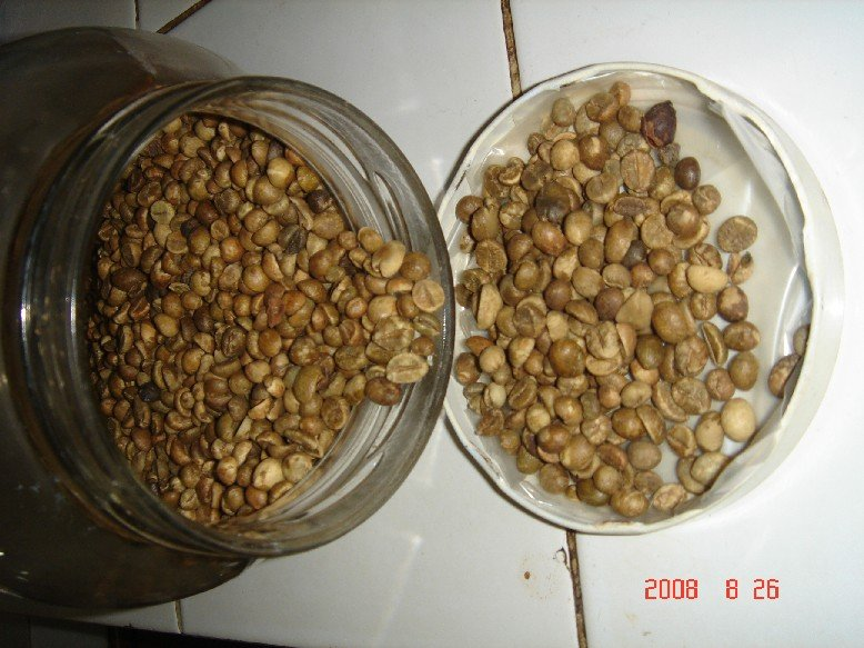 Cheap Famous Indonesian Robusta Coffee bean