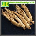 High quality Ginseng Root P.E
