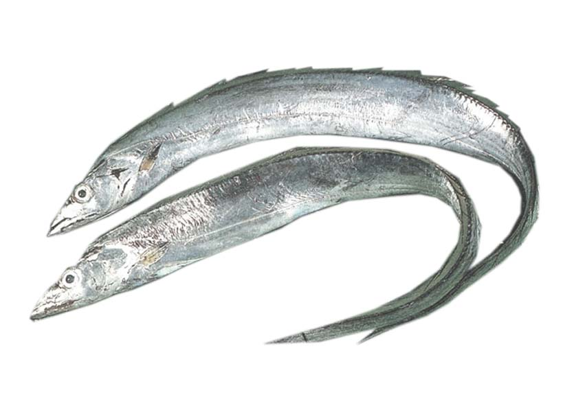Ribbon Fish a Seafood