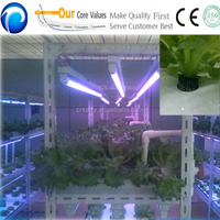 Automatic indoor hydroponic systems for organic vegetables applies soilless agriculture for vegatable cultivation