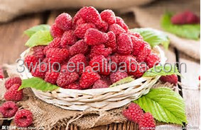 Health Food Black Raspberry Ketone Extract,Raspberry Extract
