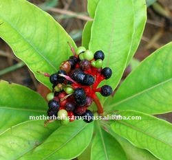 Rauwolfia Serpentina Extract For Health