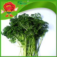 environmentally friendly bulk green Parsley strong flavor