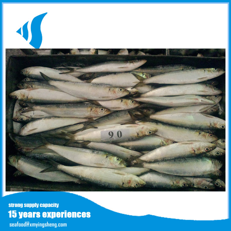 New landing factory good price frozen sardine fish
