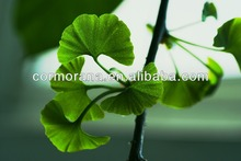 GMP & ISO extract of ginkgo biloba leaves, ginkgo biloba leaf extract, USP32, EP6.0