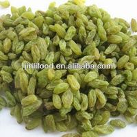 AA seedless green raisin grape high quality / best quality top quality