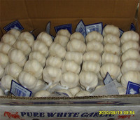 Brand new garlic specification with best price black garlic sale buy chinese garlic