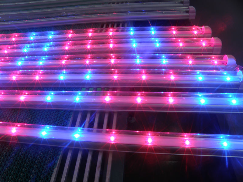 Proffesional supplier of 20W T8 tube for aquarius growing system with 1W high power of 660nm red and 460nm blue led source