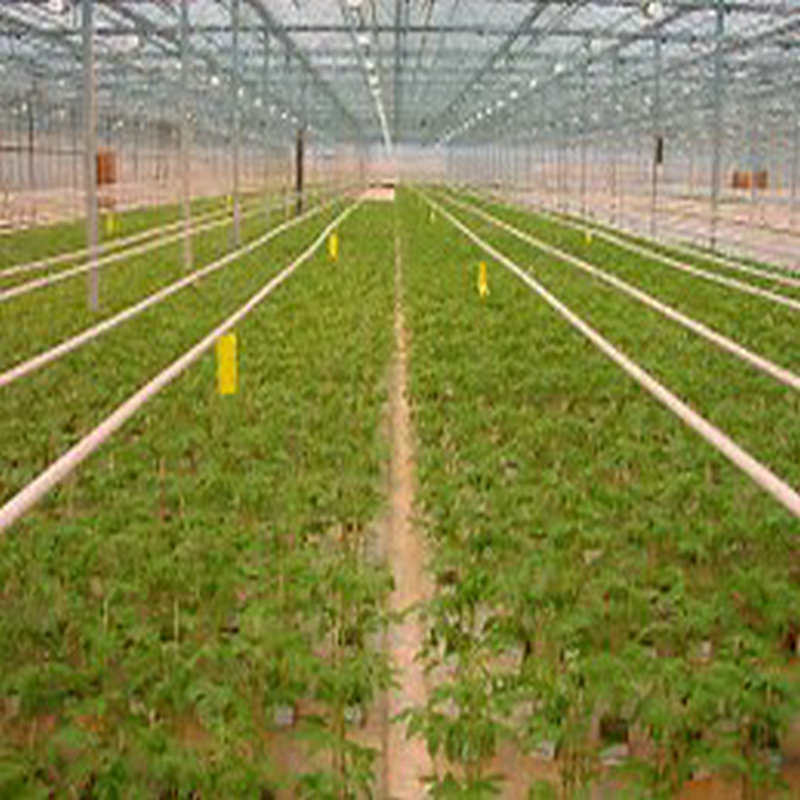 Cheapest and Qualified Galvanized-steel and Plastic-film Tunnel Greenhouse