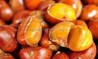 Well Sold of Chinese Chestnuts/producted Chestnuts without shell for food