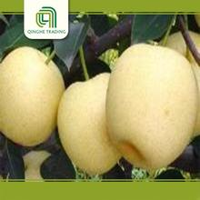 farm fresh gold pear from china