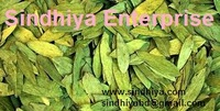 Best quality Clean & Pure Cassia angustifolia Senna Leaves