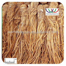 Free sample !wholesale herbal extraction powder for women health natural Chinese angelica extract 10:1,20:1,30:1