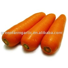chinese fresh carrot 2017