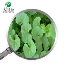 Centella Asiatica Extract Gotu Kola Extract Powder Total Triterpenes 10%-80% For Skin care products