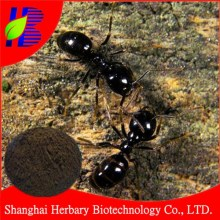 High quality Wild Black Ant P.E. 20:1