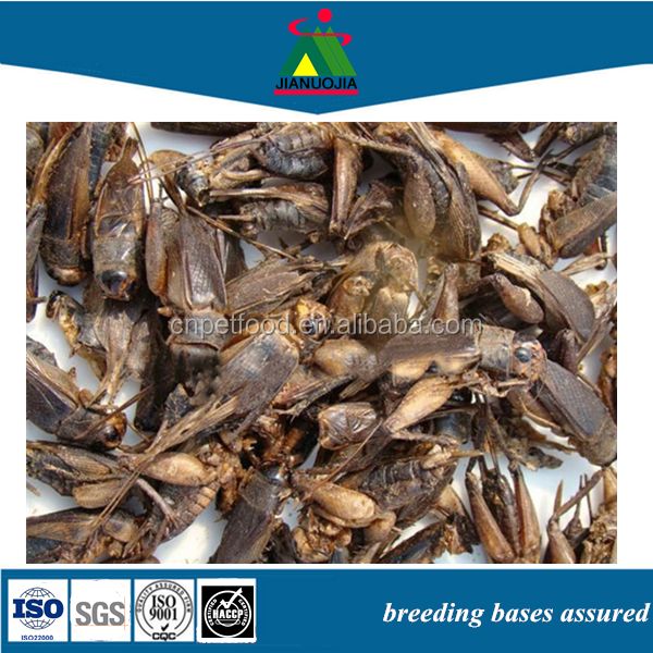 Dried Crickets for chicken food