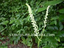 top quality Black cohosh extract powder ( Triterpenoid saponins )
