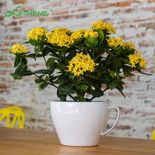Wholesale vietnam cute small ornamental table desk plastic planter coffee tea cup and saucer flower pot with handles