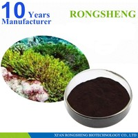 Brown natural soluble seaweed extract powder