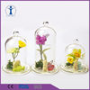 China Factory Home Decor Customized Terrarium