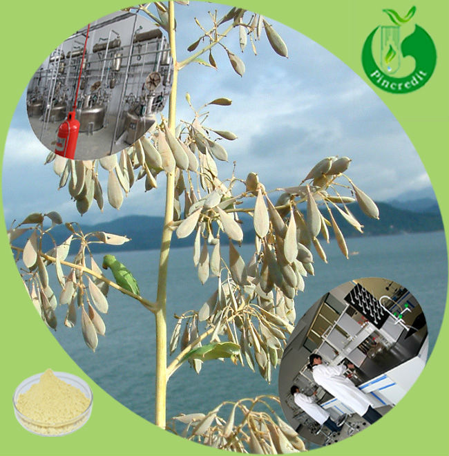 Hot selling macleaya cordata extract in stock sanguinarine;chelerythrine