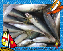 best selling products 200/300G WR frozen pacific mackerel whole part frozen fish