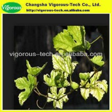 Favourable Fruit Organic 95%OPC 80% polyphenol grape leaf extract